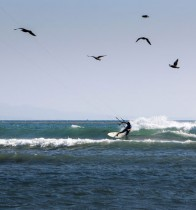 Jeff-Kafka-Kiting-Birds-Mexico